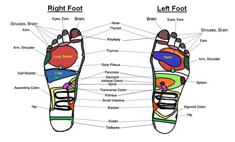 foot diagram foot chart reflexology charts