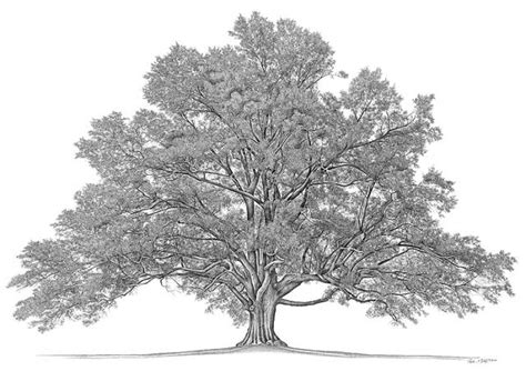 what is the history of trees you may a pdf file of the abrahall family tree