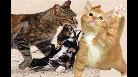 10 Funniest Cat Photos by Most Amazing Cat Cat Compilation