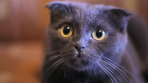 are dogs or cats better 5 reasons cats make better pets than dogs