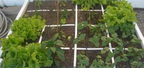 Most View Pict Square Vegetable Garden Square Foot Vegetable Garden