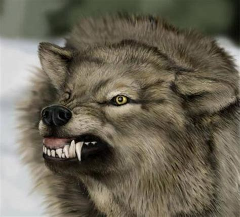Angry Wolf angry wolf free images at clker vector clip