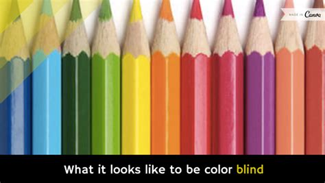 what does color blindness look like what it looks like to be color blind video holy kaw