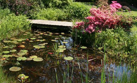 Pflanzen Für Den Teich 1037 by Biotop Naturteich