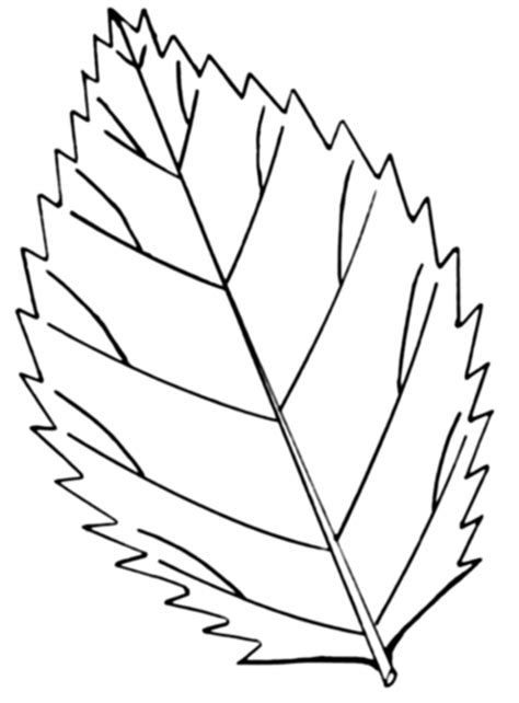 coloring page of a leaf leaf coloring pages coloring ville