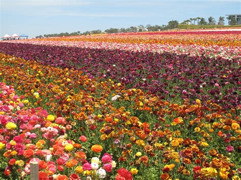 Flower Garden Carlsbad It S Earth Plants The Start Of