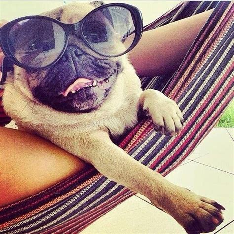 Him Kaos T Shirt Summer Time Dtg 1000 images about pugs on black pug puppies
