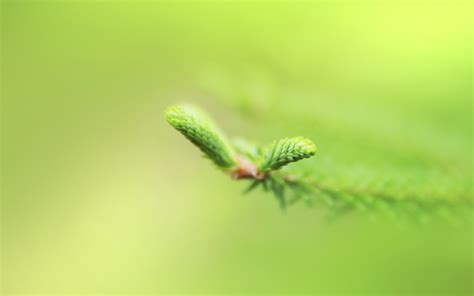 green hd wallpaper best fresh background image use lives fresh green wallpapers hd wallpapers id 12236