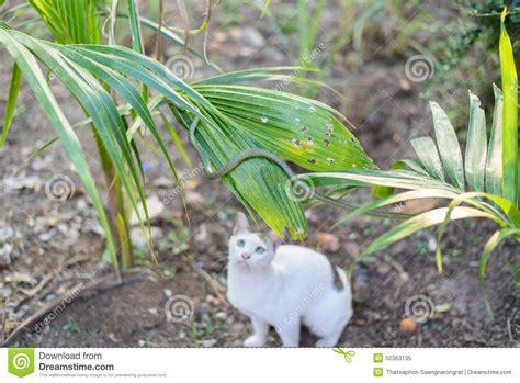 serpent vert de cr 234 page de chignon blanc dans le jardin