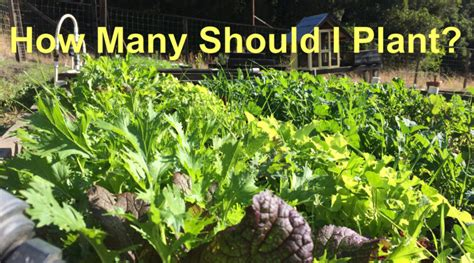 When Should I Plant A Vegetable Garden How Much To Plant Per Person
