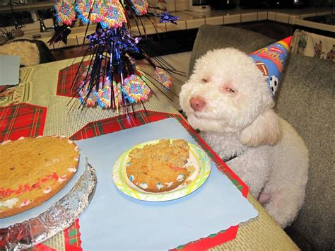 puppy birthday meme birthday your meme