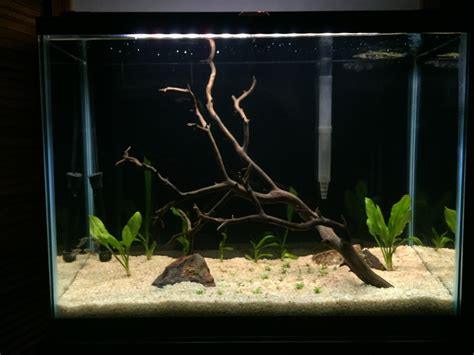 aquascaping tall tanks aquascaping tall tanks aquascaping tall tanks 28 images