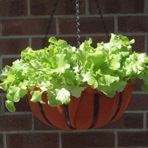 Lettuce Planter by How To Build A Vertical Planter For Lettuce Homestead