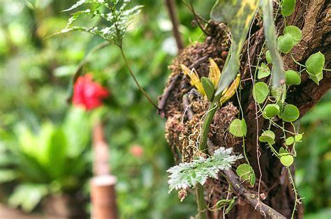 Botanischer Garten Berlin Pflanzen Kaufen by Botanischer Garten W 252 Rzburg Botanischer Garten