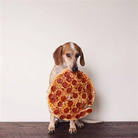 pizza puppy pizza hellogiggles