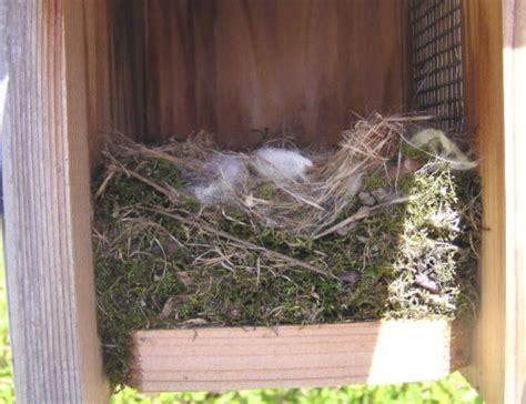 chickadee2 bluebirdnut