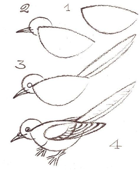 how to draw doodle birds comment dessiner un oiseau 2761 arts pla