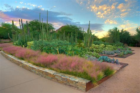 Arizona Botanical Gardens visit the desert botanical garden top places to see in