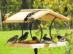 What Is A Bird Feeder Bird Feeders Creating A Bird With The Right