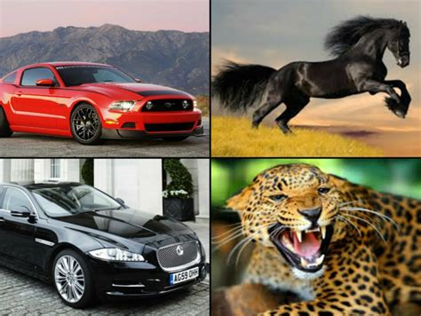 new year named after animals 17 iconic cars matched with photos of the animals they are