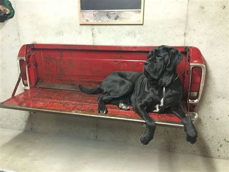 truck bed bench big dog ernie on ford tailgate bench cool ideas