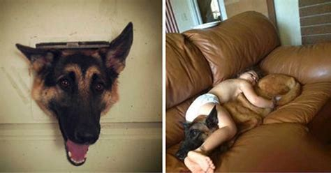 are german shepherds family dogs german shepherds make horrible family dogs here are 10 reasons why