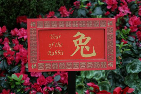 new year predictions rabbit zodiac predictions 2013 rabbit feng shui diy