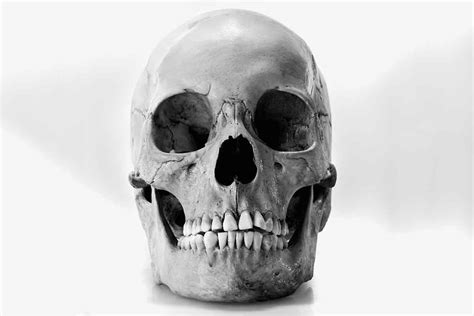 skull images hundreds of mystery human skulls sold on ebay for up to