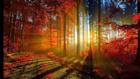 imagenes 3d bosques bosques en oto 209 o hd 3d arte y jardiner 237 a youtube