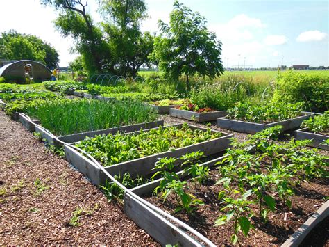 Food Garden by Food Pantry Garden Growing In Oswego Coronado