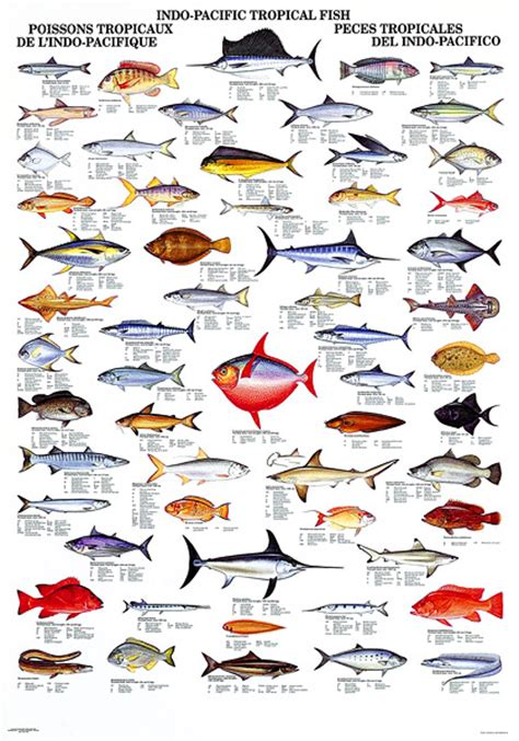 gallery for data recalc dims fish pinterest fish