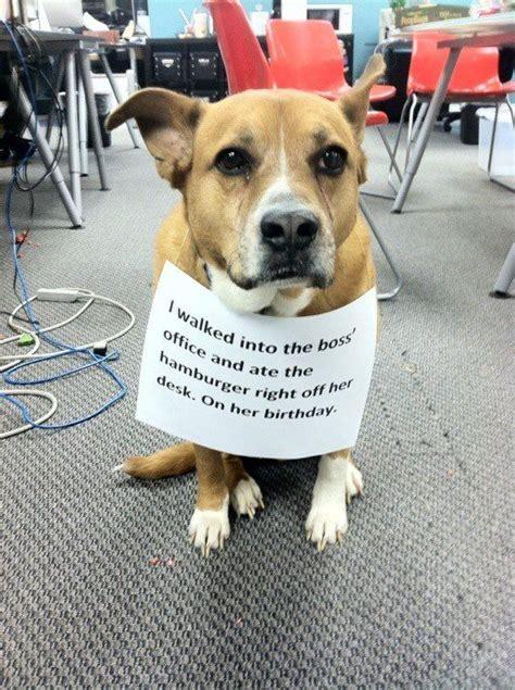 dog shaming desk 17 best images about dog shaming on pinterest left out
