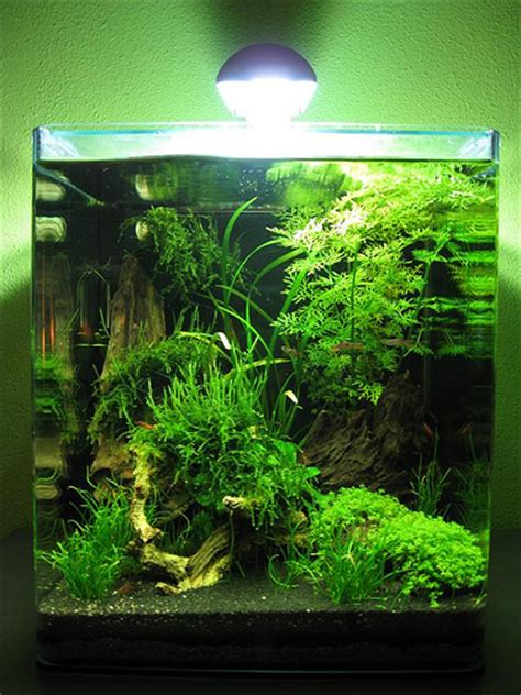 betta aquascape aquascape aquascaping pinterest aquariums fish and