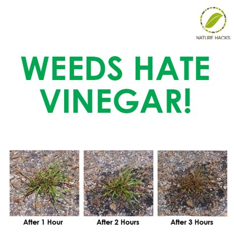 how to get rid of weeds in flower beds how to destroy weeds with vinegar soap and salt