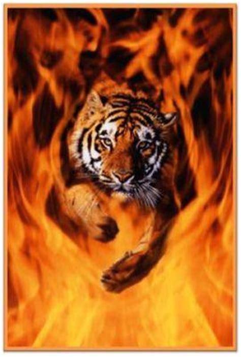 imagenes de tigres cool tigres de bengala tigres bengala twitter