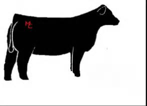 Show Heifer Outline by Pictures