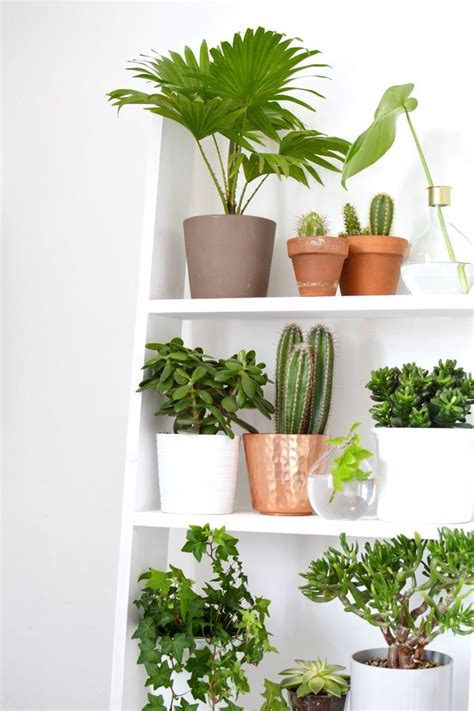 1000 images about indoor gardens on gardens