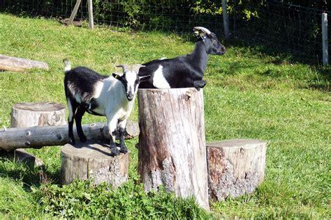 nutztiere im garten halten tierparadies garten