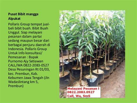 Jual Bibit Mangga Alpukat Di Bogor jual bibit tanaman buah dalam pot jual bibit mangga