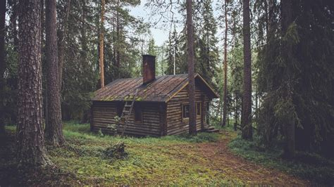 wood cabin in the forest download hd wallpapers