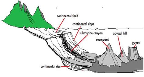 Continental Shelf Slope And Rise by Distribution Of Oceans And Continent Class 11 Notes