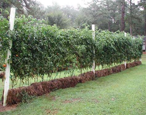 Straw Garden by Carolina Straw Bale Gardens In Your Backyard