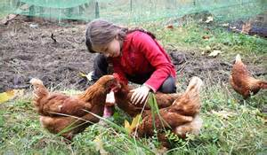 Raising Chickens For Eggs In Your Backyard Eartheasy Blograising Backyard Chickens My 8 Year S Egg Business Eartheasy