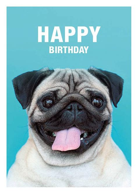 pug birthday cards 25 best ideas about happy birthday pug on pug puppies pugs and pug
