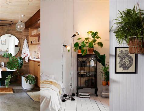 plantas de interior poca luz 3 plantas de interior que necesitan poca luz decoraci 243 n