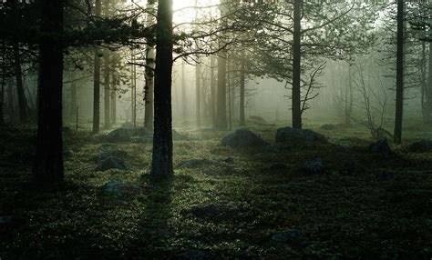 Forest Scene Wall Mural image gallery misty forest