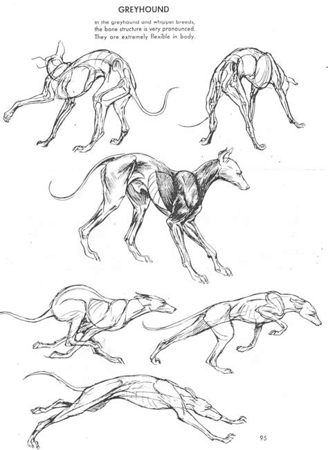 Art of Animal Drawing   Book   The Art Of Animal Drawing