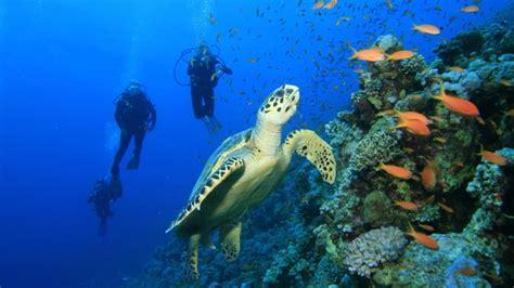 dive package perhentian scuba diving tour packages