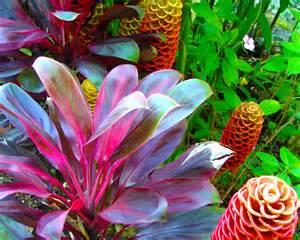 Hawaiian Tropical Plant Nursery - vibrant red ti plant and beehive ginger hawaii tropical botanical gardens oahu hand painted