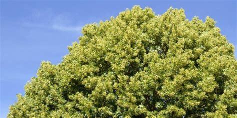 alberi per giardino alberi per il giardino ecco i cinque pi 249 veloci cose di